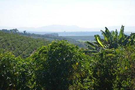 Cafezal. Guaií - Cooperativa Camponesa (Foto: DoDesign-s)